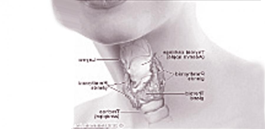 እንቅርትና ማረጥ (Thyroid እና Menopouse)